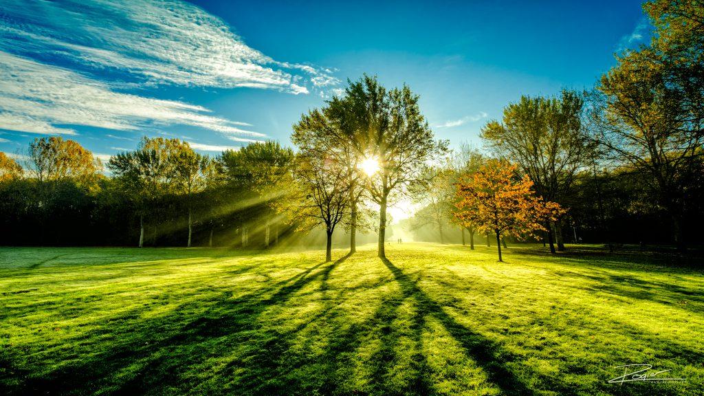 schollenbos-weide-zonnestralen