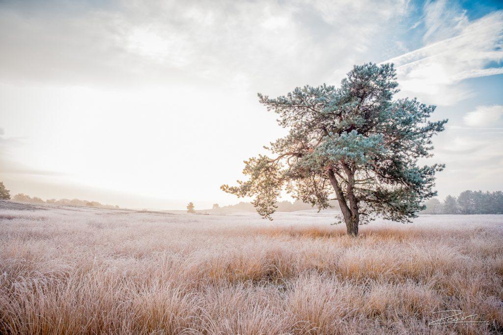 Landschapsfotografie: de Asselse Hei