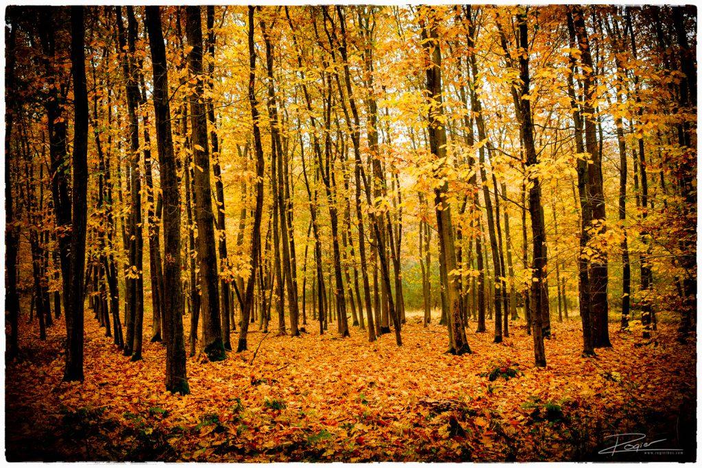 Lanschapsfotografie: bossen bij Hoog Soeren