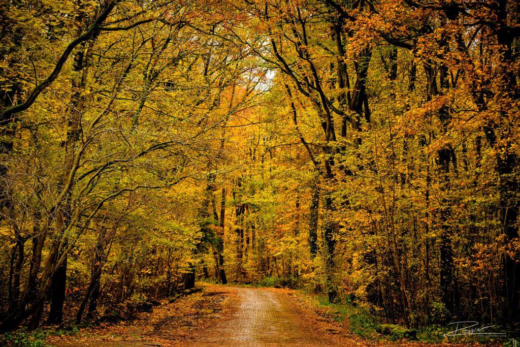 Herfst in het Kralingse Bos