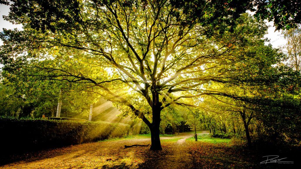 Vroeg ochtendlicht door de boom