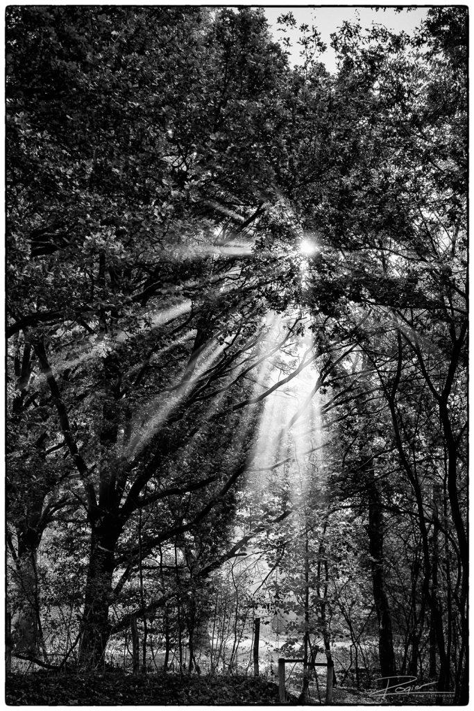 Licht door de boom