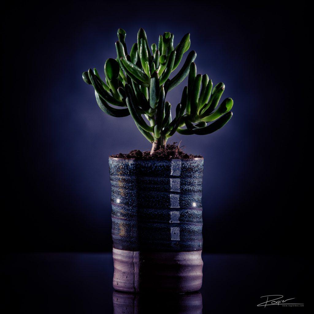 Productfotografie voor Mijn Plantenwinkeltje
