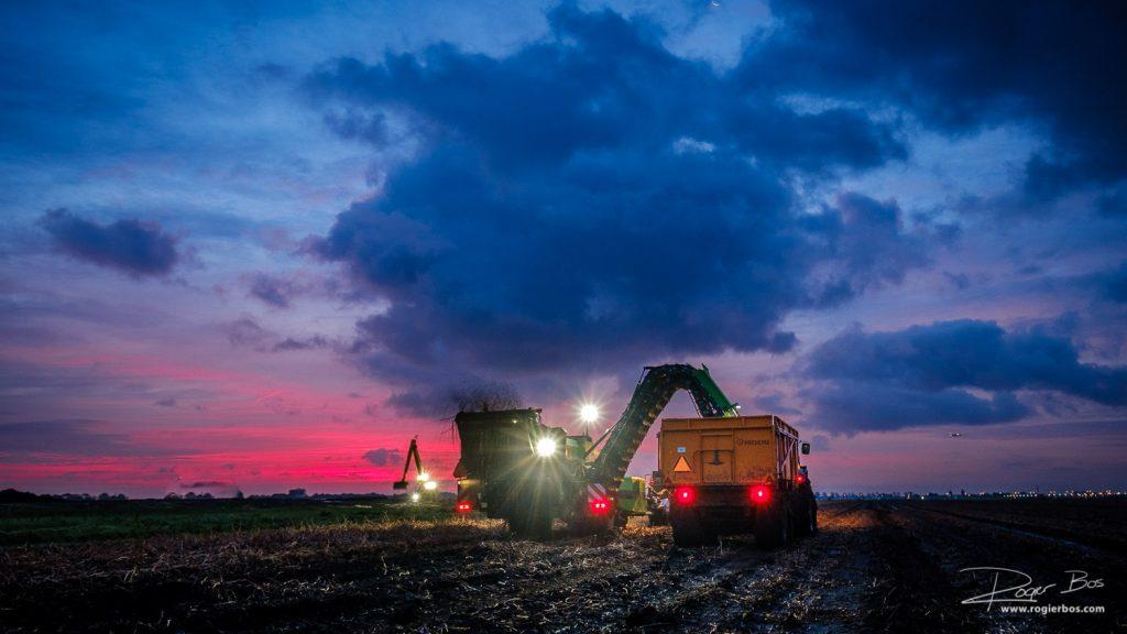 Aardappels rooien begint al voor zonsopgang.